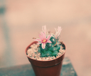 cactus, flower, and photography image
