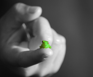 frog, black and white, and photography image