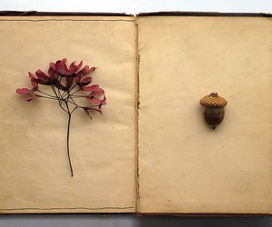 book, flowers, and acorn image