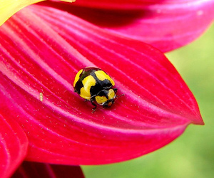 bug, colourful, and flower image