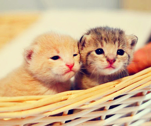 cats, kitties, and Gatos image