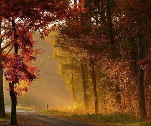 nature and forest in autumn image