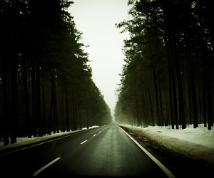fog, green, and road image