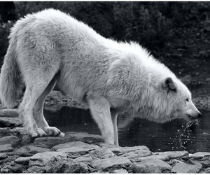 75 images about Wolf Spirit Animal on We Heart It   See more about