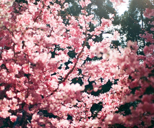 autumn, blossom, and photography image