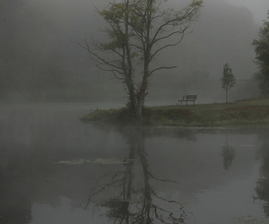 bench, fog, and foggy image
