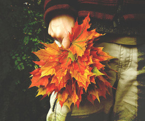 autumn, fall, and need image