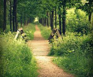 nature, path, and woods image