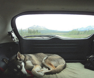 dog, car, and husky image