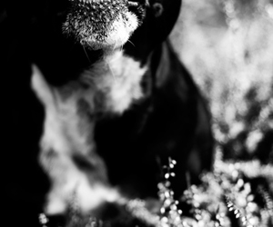black dog, bullterrier, and cool image