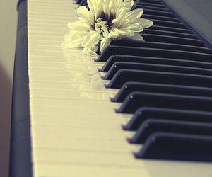conceptual, flower, and photography image