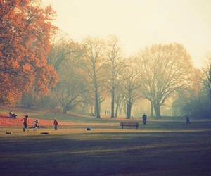 tree, park, and autumn image