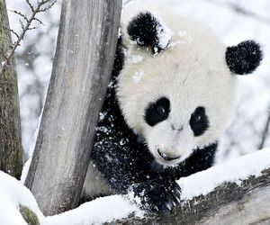 animal, cute, and cold image