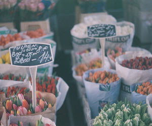 flowers, vintage, and tulips image