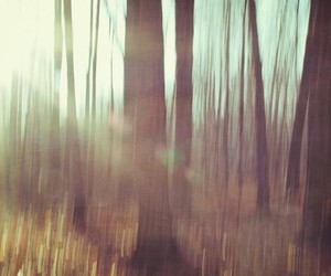 blur, woods, and blurred image