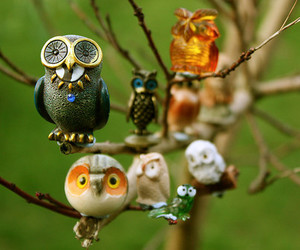 owl and birds image