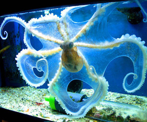 octopus and blue image