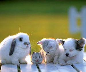 animals, best friends, and cute image