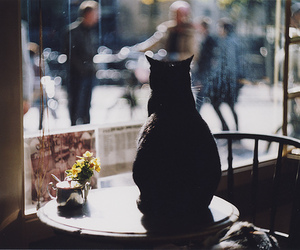 cat, black, and photography image