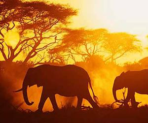 elephant and africa image