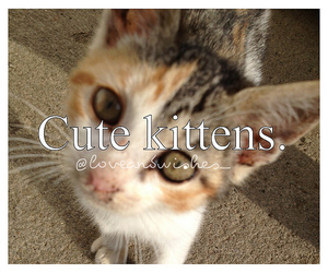 adorable, cat, and it image