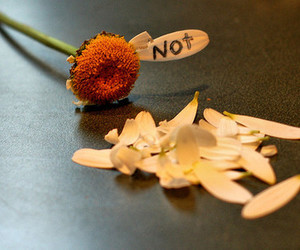 flower, not, and love image