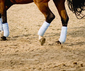 equestrian, hoof, and hooves image