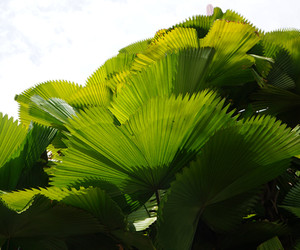 green and palms image