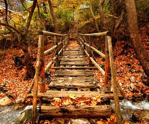 autumn, bridge, and fall image