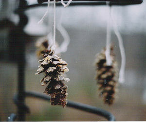 photography and pinecone image