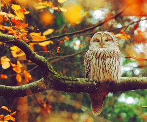 owl, autumn, and fall image