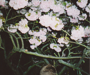 boy, flowers, and grunge image