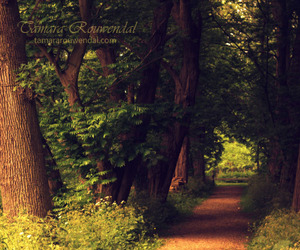 beautiful, flora, and forest image