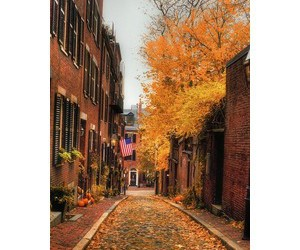 alley, beauty, and flowers image