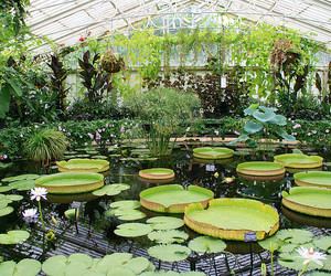 green, lilypads, and london image