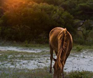 horse, life, and pony image