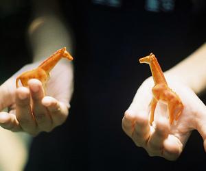 giraffe, photography, and animal image