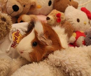 guinea pig, hello kitty, and sleep image