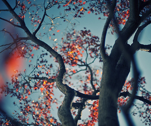 tree, nature, and leaves image
