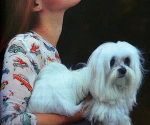 lana del rey, dog, and smoke image