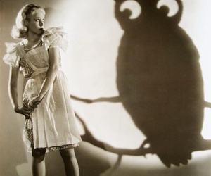 owl, shadow, and vintage image