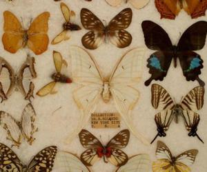 butterfly, insect, and animals image