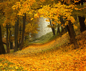 nature and golden autumn image