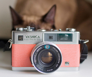 cat, camera, and pink image