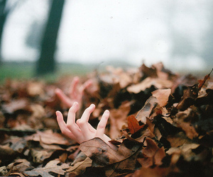 autumn, leaves, and hands image