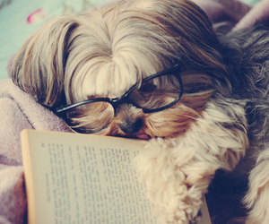 dog, cute, and book image