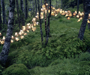 lamp, light, and forest image