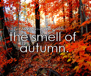 autumn, fall, and smell image
