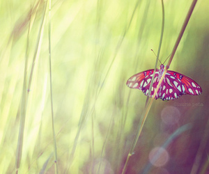 butterfly, grass, and green image