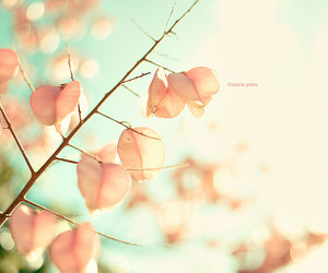 pink, branches, and tree image